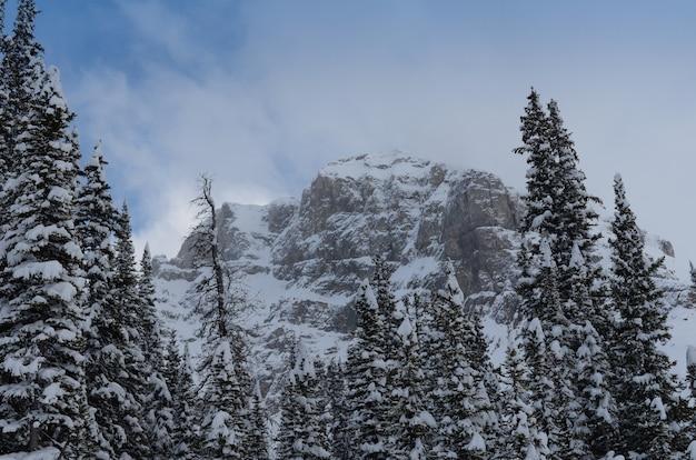 Sommet de la montagne couverte de neige entourée de conifères