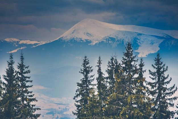Sommet de la montagne enneigée et pins sous ciel nuageux paysages spectaculaires ukraine des carpates europe