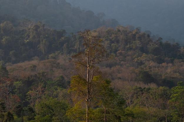 Sommet recouvert de forêt tropicale sèche et décidue.