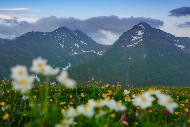 Sommets de montagne sur fond de ciel coucher de soleil et de prairies alpines fleuries lumières bleues