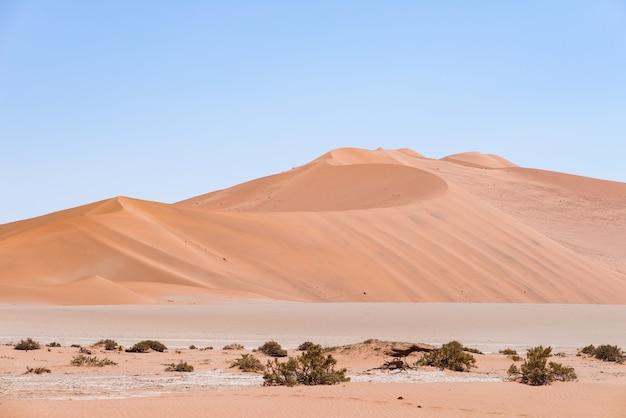 Sossusvlei namibia, dunes de sable majestueuses. parc national du namib naukluft, namibie