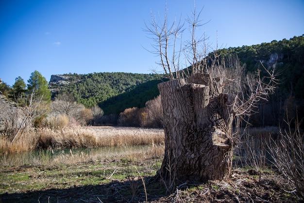 Souche d'un arbre mort dans la brousse