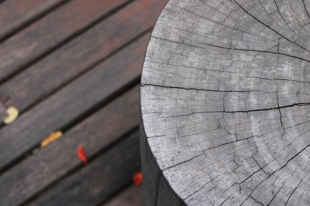 Souche d'arbre sur les planchers en bois