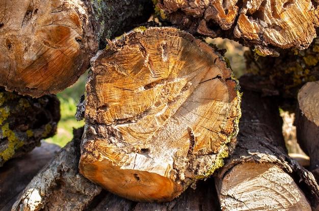 Une souche de pommier coupée mangée par les dendroctones des arbres. souche d'arbre fraîchement coupée.