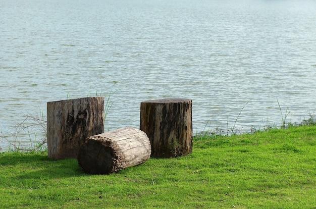 Des souches au bord de l'eau dans le parc