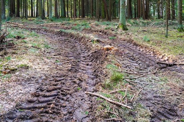 Les souches de branches et les roues à pneus retracent l'impact humain sur l'environnement, la déforestation et l'exploitation forestière