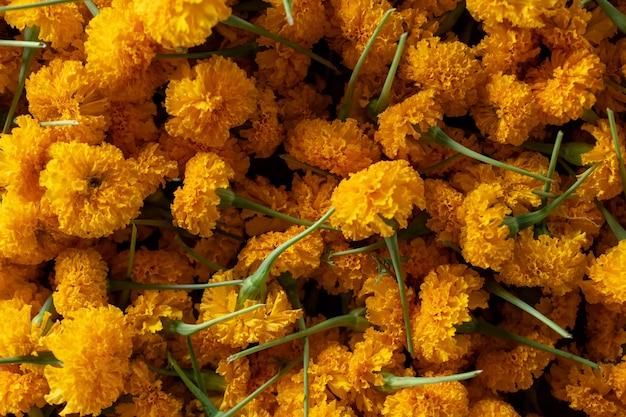 Le souci des fleurs jaunes est un symbole de prospérité. les croyances de la thaïlande.