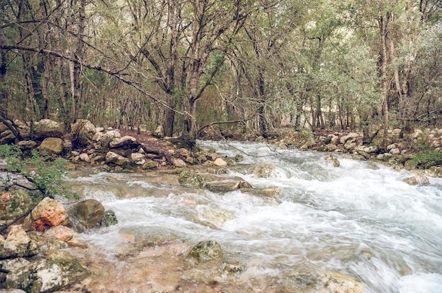 Source d'eau naturelle avec des affleurements intermittents qui poussent de manière diffuse