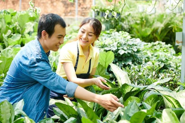 Souriant employé de pépinière aidant le client à choisir une plante de cannes muettes pour son appartement