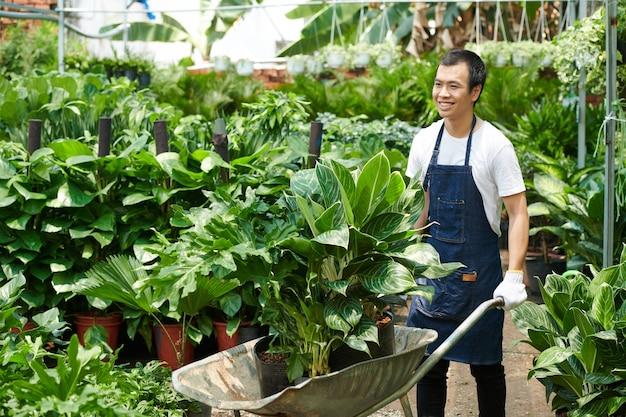 Souriant jeune ouvrier pépinière poussant une brouette pleine de plantes aux feuilles luxuriantes