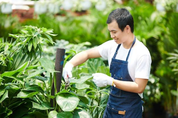 Souriant jeune ouvrier pépinière soucieux des fleurs, il coupe des feuilles avec un sécateur