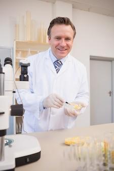 Souriant scientifique examinant les graines de maïs dans une boîte de pétri