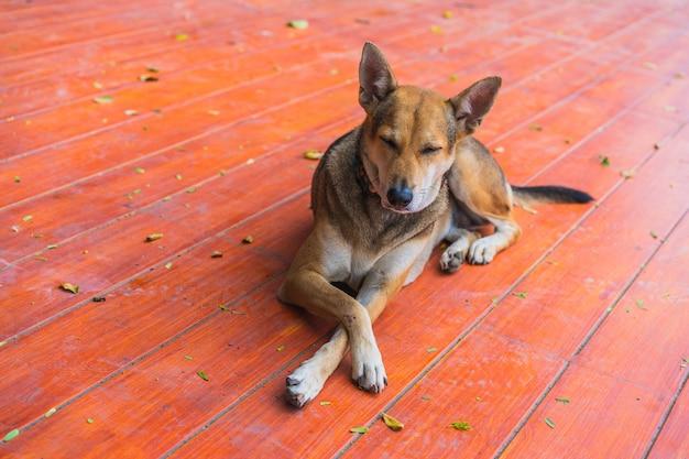 Sourire de chien thaïlandais sans abri s'allonger sur le sol