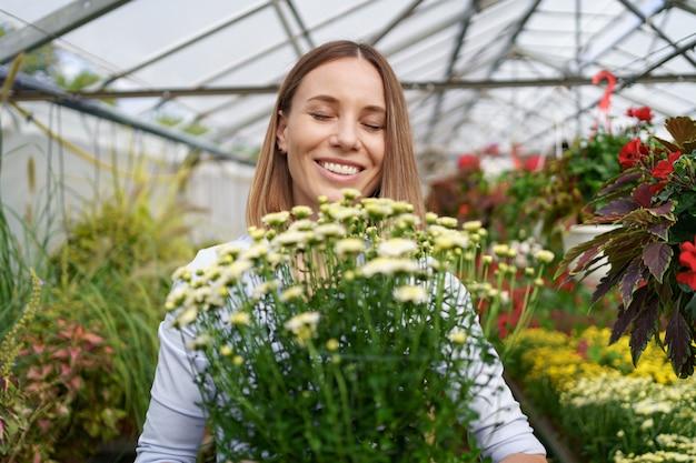 Sourire heureux fleuriste dans sa pépinière debout tenant des chrysanthèmes en pot dans ses mains alors qu'elle s'occupe des plantes de jardin dans la serre