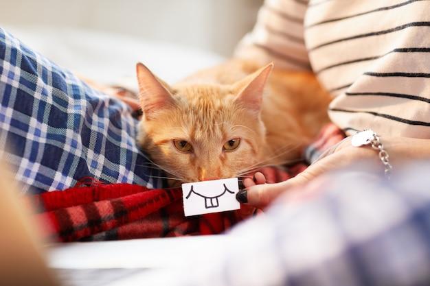 Sourire à pleines dents pour ginger cat