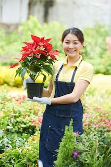 Sourire sympathique travailleur du centre de jardinage tenant un pot avec une fleur de poinsettia