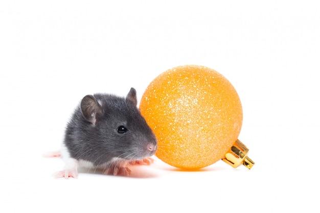 Souris ou rat mignon avec boule de noël