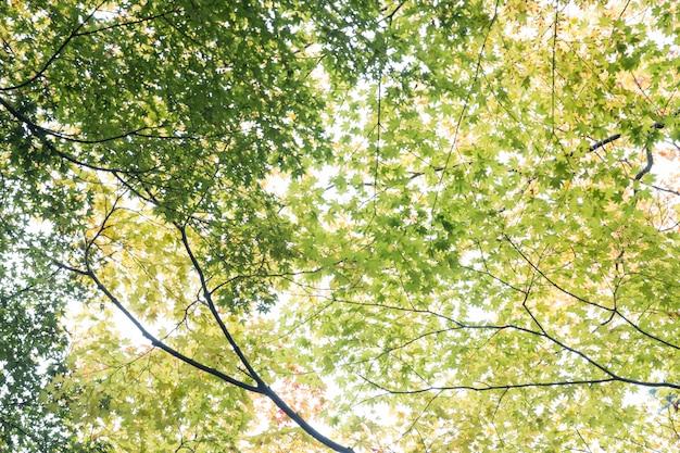 Sous les feuilles vertes à kyoto, au japon.