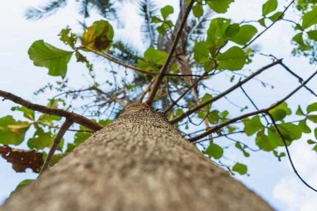 Sous la vue de l'arbre - une photo d'arpeture basse se concentrant au milieu de la tige de l'arbre