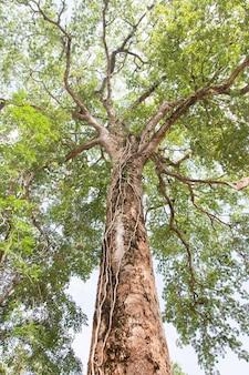 Sous la vue de l'ombre; grand arbre vert nature composition