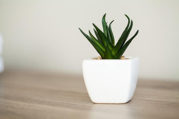 Spa. plante succulente sur le rebord de la fenêtre dans la salle de bain moderne