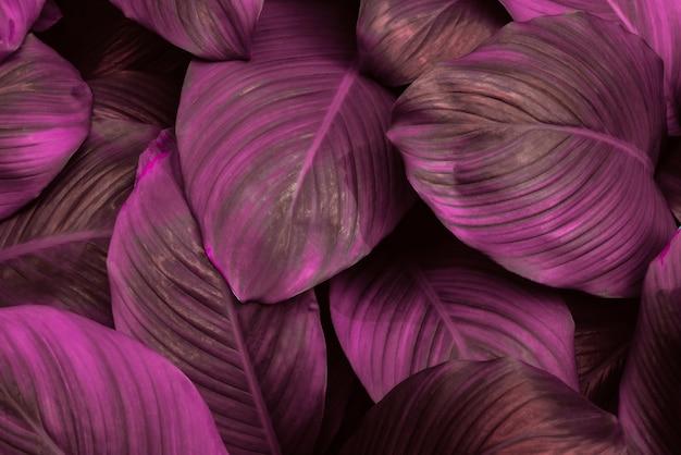 Spathiphyllum cannifolium feuille concept abstrait texture damassé fond naturel feuille tropicale