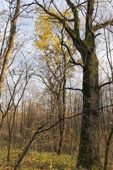 Spécificités et particularités de la saison d'automne à l'exemple des plantes à feuilles caduques, chute des feuilles d'automne en forêt ou dans le parc