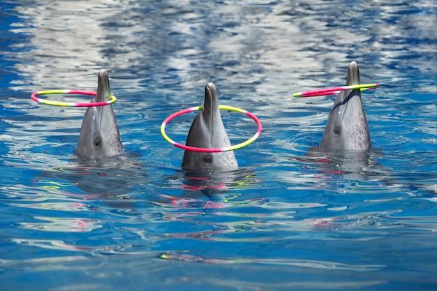 Spectacle de dauphins, jouer aux cerceaux dans la piscine.