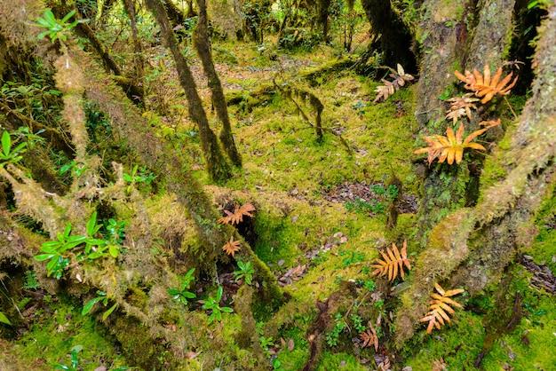 Sphaigne dans le sentier de la nature d'ang ka luang