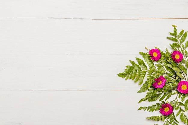 Splendides fleurs roses et feuilles vertes sur une surface blanche