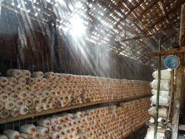 Springer d'eau dans la maison de champignon de phénix