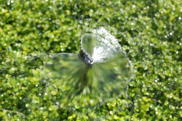 Springer fait couler l'eau jusqu'à un arbre vert ornemental.