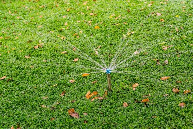 Springer, pulvérisation d'eau sur l'herbe verte