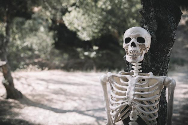 Squelette appuyé sur un arbre dans le parc