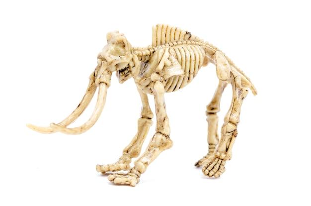 Squelette de dinosaure à l'éducation scientifique