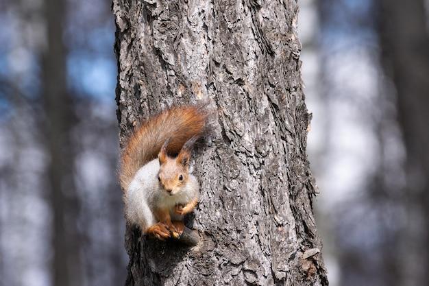 Squirrel park en hiver