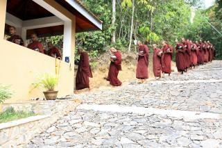 Sri lanka moines, rangée