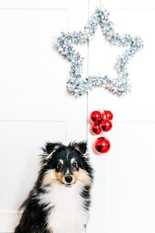 Star et boules rouge décoration pour la maison enracinement pour le nouvel an et noël, fond, brillant, chiot assis