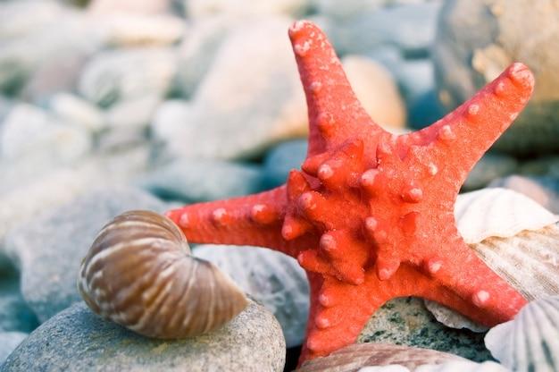 Starfish close