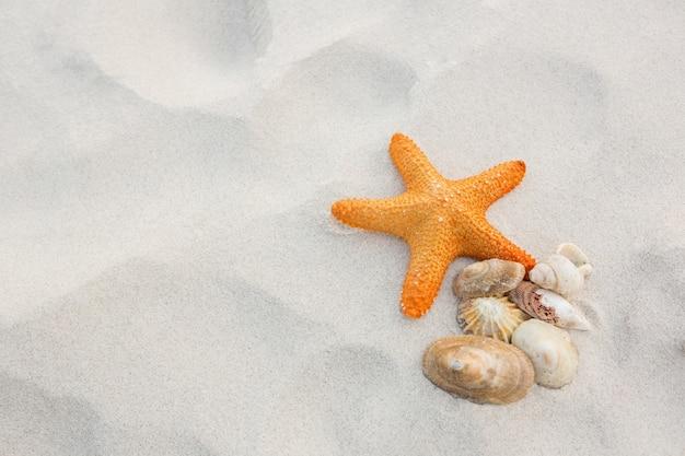 Starfish et des coquillages sur le sable