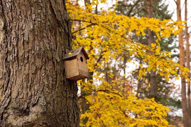 Starling house on tree in autumn park