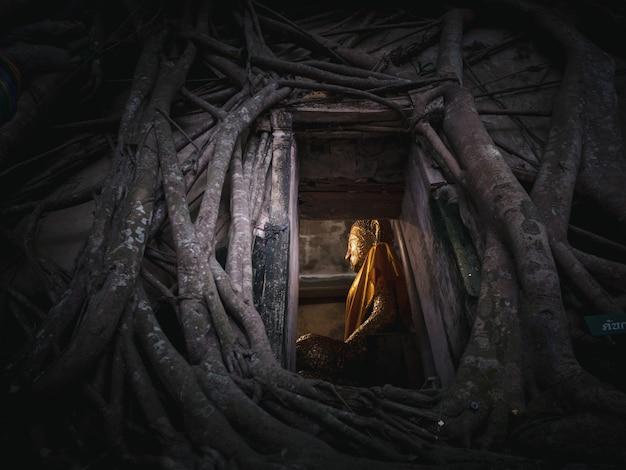 Statue de bouddha dans la racine de l'arbre à wat bang kung en thaïlande