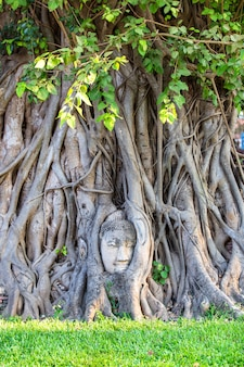Statue de tête de bouddha dans les racines des arbres au wat mahathat dans la province d'ayutthaya, thaïlande