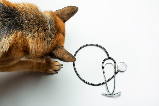Stéthoscope de chien et de médecin se bouchent