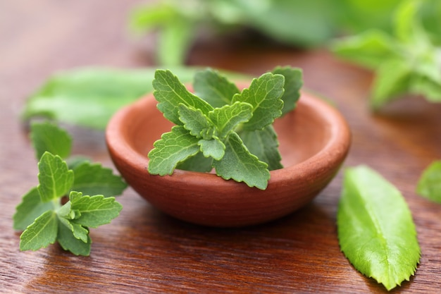 Stevia avec d'autres herbes médicinales close up