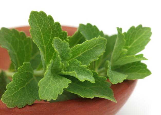 Stevia sur un bol marron sur fond blanc