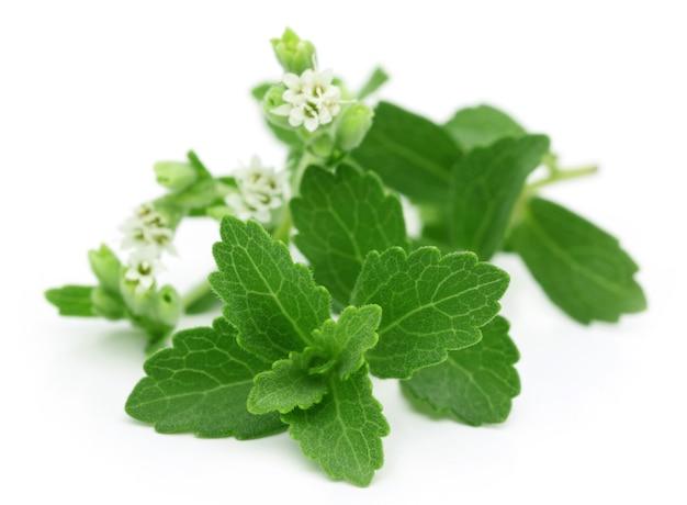Stevia- un substitut de sucre isolé sur fond blanc