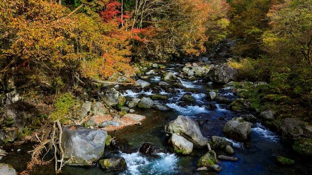 Stream with autumn leaves saison au japon