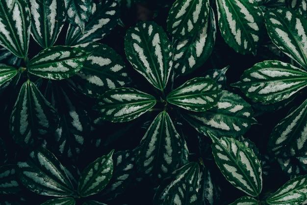 Structure du fond naturel des feuilles