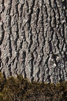 La structure de l'écorce de l'arbre, pour protéger le bois des insectes et des ravageurs
